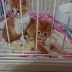 とっても可愛い子猫2匹を保護しました